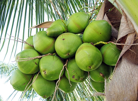 Coconut water for good health